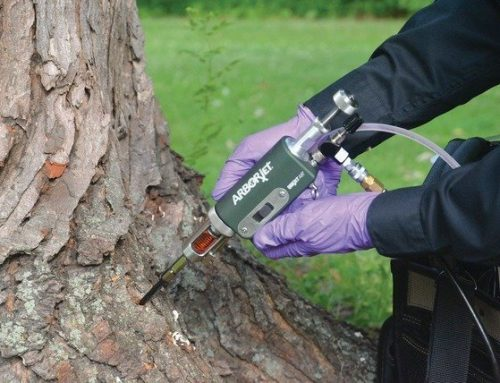 How important to protect your trees?