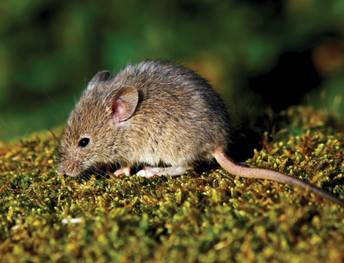 Get familiarize with Rodents!!